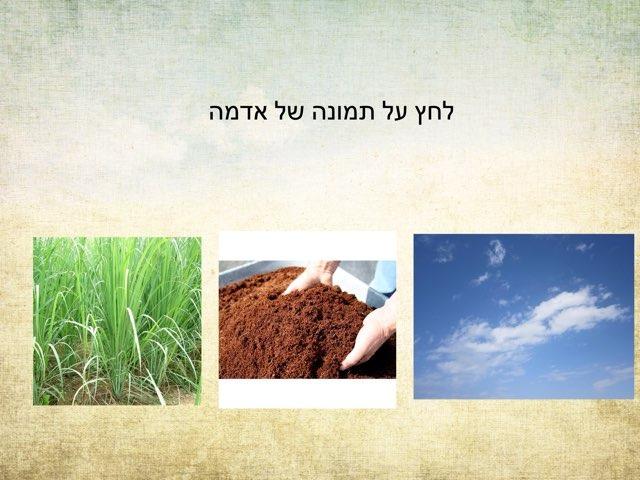 מבדק גן ירק by Inbar Adar