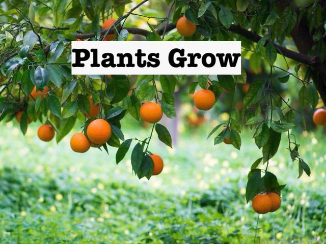 Plants Grow by Julia Hearn