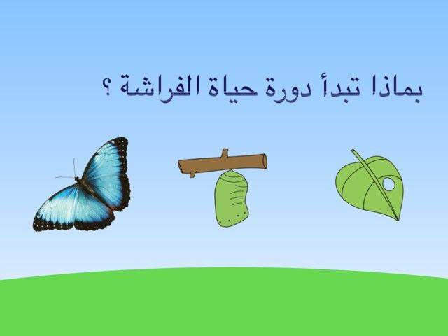 لعبة 8 by Sarah Ahmad