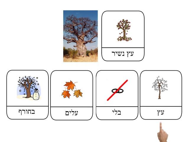 עץ נשיר by Orange Class