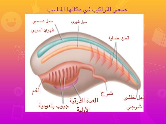 تراكيب  اللافقاريات الحبلية by UMM KHALID Al-Harbi