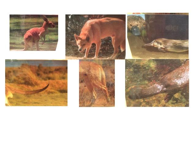Dieren Van Australië by Florence Van Praet