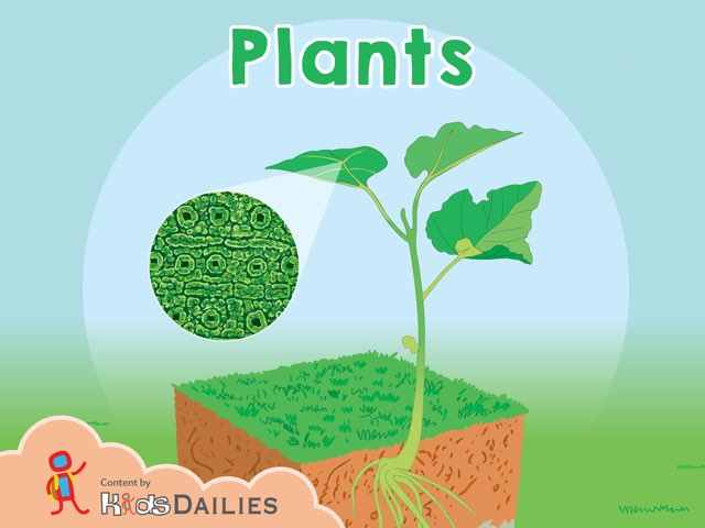 Plants by Kids Dailies