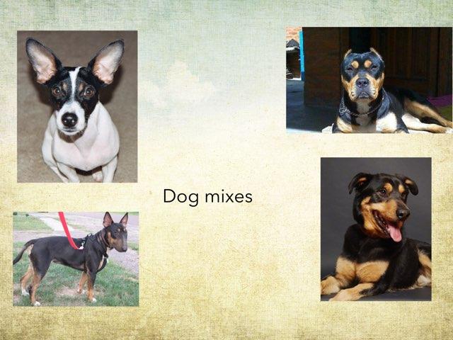 Dog Mixes by Frances Chapin