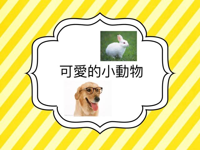 可愛的小動物 by Bell Chung