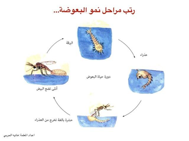 البعوضة by هانيه الحربى