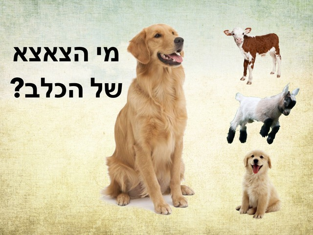 יונקים וצאצאיהם by Hadar Itzhaki