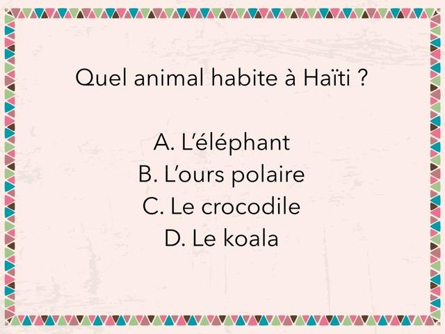Haïti Exemple by Lucy Shepley