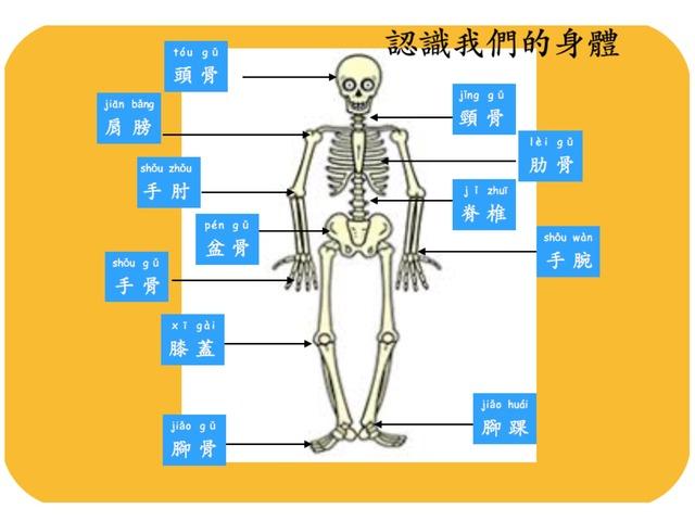 認識我們的身體 by Primary Year 2 Admin