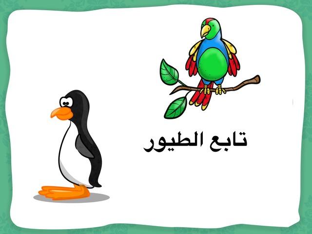 تابع درس الطيور by نورة أحمد