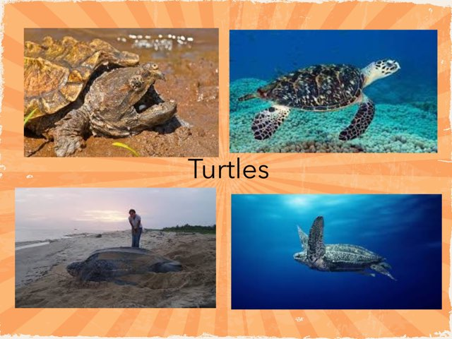 Turtles by Frances Chapin