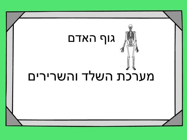 מערכת השלד והשרירים-שנהב by מכללה תלפיות