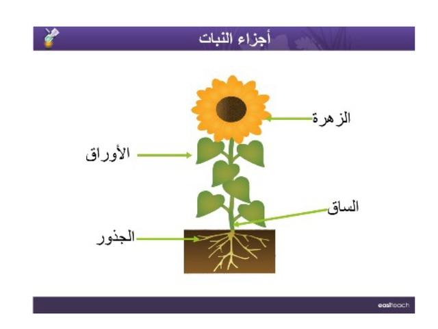 الدرس الثاني النباتات وأجزائها علوم الصف الثالث الإبتدائي By Sofy Adam Educational Games For Kids On Tinytap