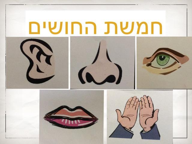 חמשת החושים by אורטל בן לולו