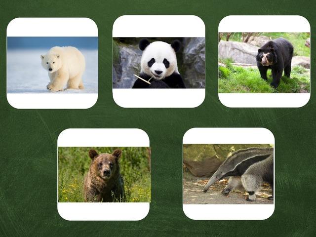 דובים by אסיף אסיף