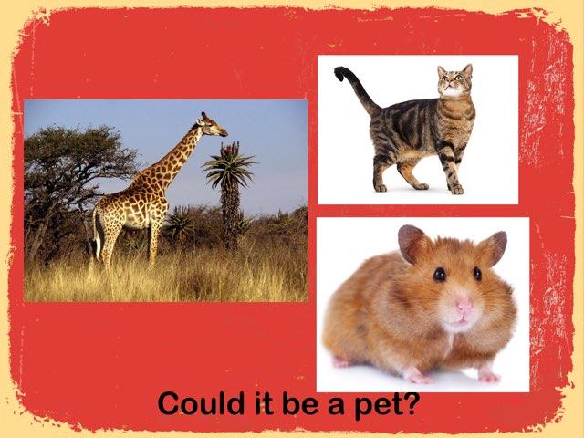 Pets by Richard Murphy