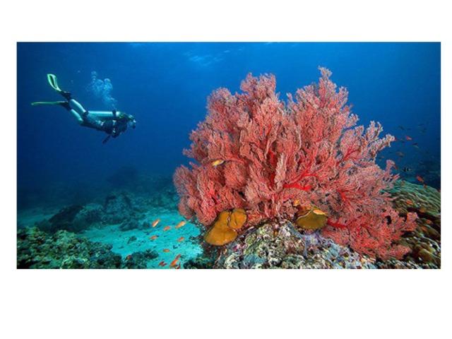كيف تؤثر التغيرات البيئية  على الشعاب المرجانية  by hanan alhashemi