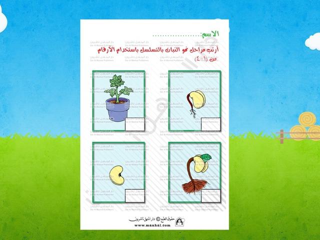 مراحل نمو النبات by Eman Alawadhi