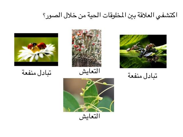 اكتشف العلاقة بين المخلوقات الحية by ام علي الأمير