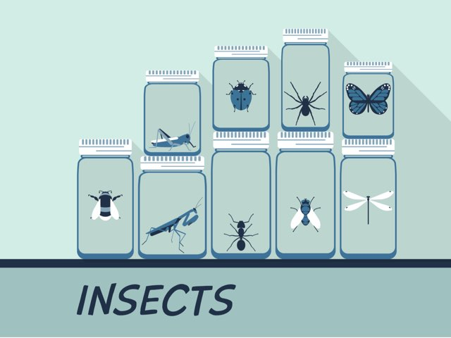 Insects by Melodi Kunn