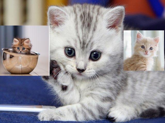 Cute Crazy Cat Mania by Mr Edmondson