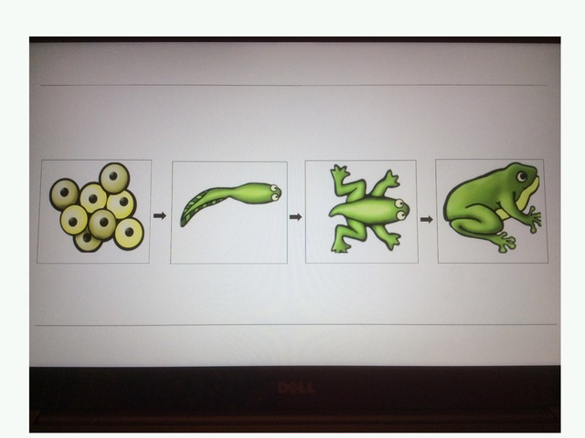 Sequencing A Frog's Life! by Rochelle Dumond