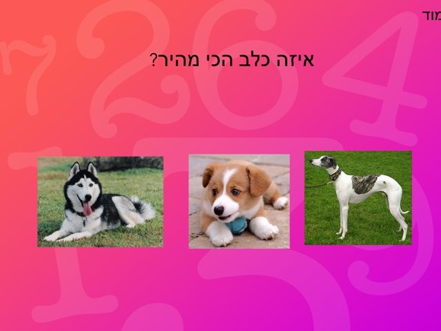 כלבים אביב וליאל by בית ספר קישון