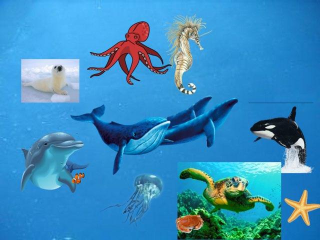 Rawan Onderwaterdieren by Yvonne .