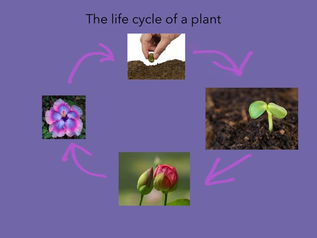 Lillian Plant by Diana Coyne