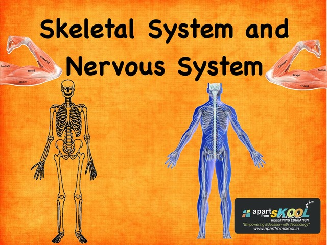 Skeletal System And Nervous System by TinyTap creator