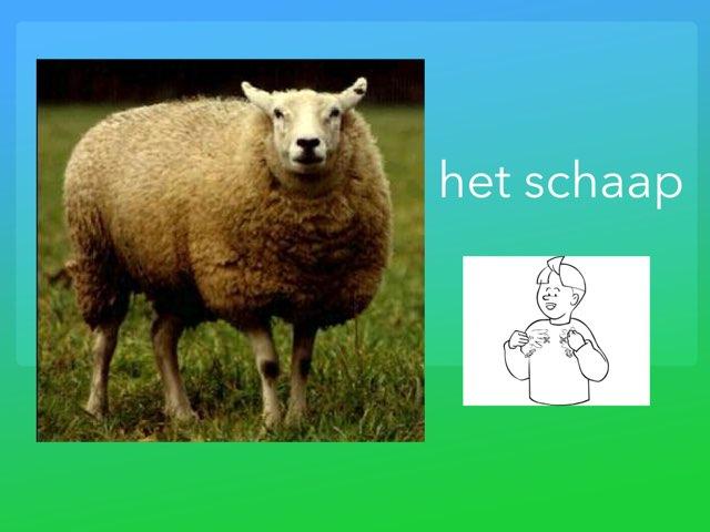 het schaap - woordenschat peuters/kleuters by Annemiek Schokker