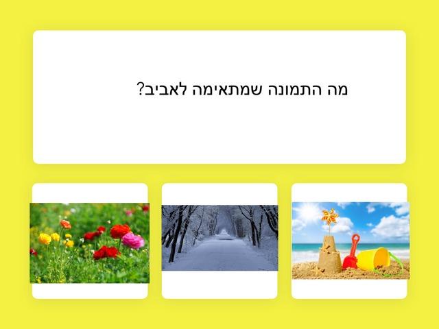 אביב תאיר by הדר יצחק