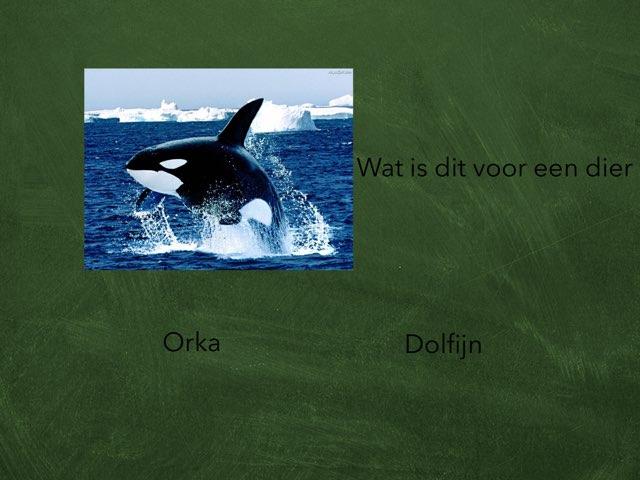 Spel 44 by Daan Geurts van Kessel