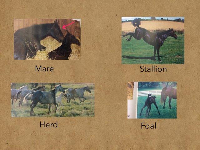 Horse Vocab by Chantel Bonner