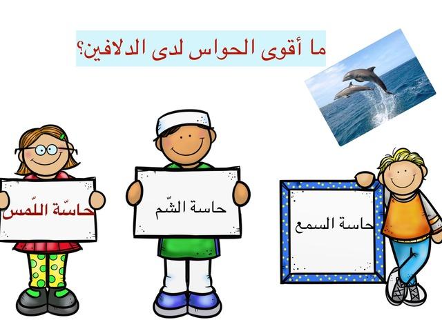 الدلافين لصف ٦ Copy  by Yasser Ghazal