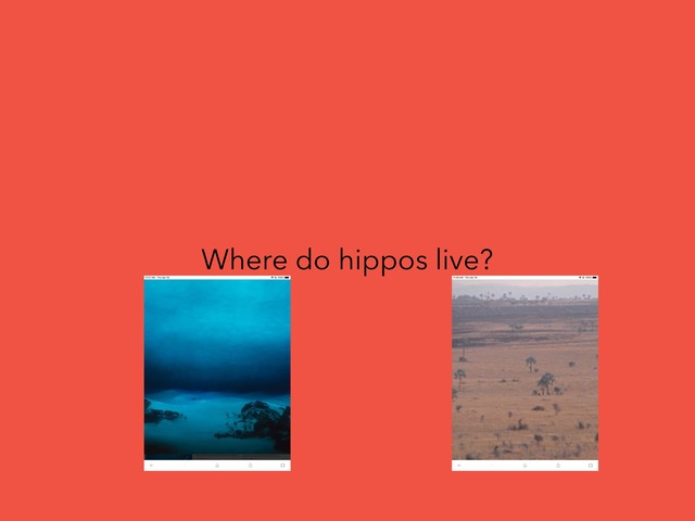 Hippo by Paula Isaacson