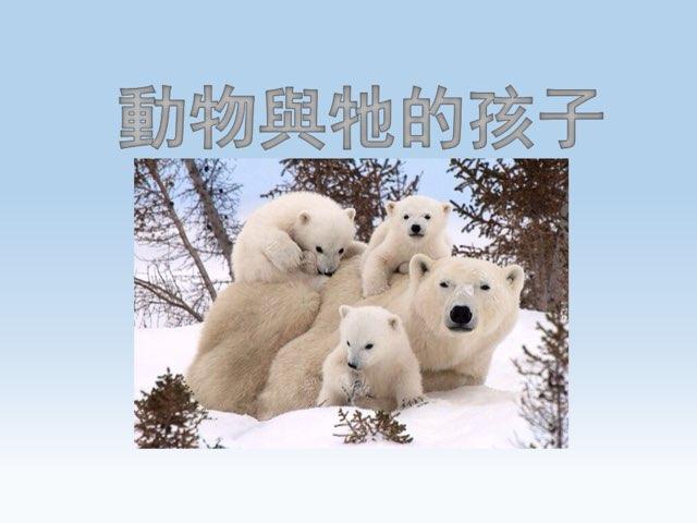 動物與牠的孩子 by Peter Cheung