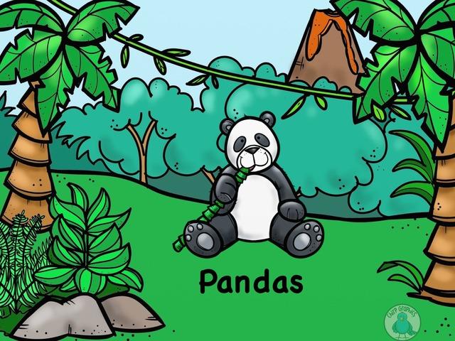 Panda- Animal Research Paper by Germaine Baughman