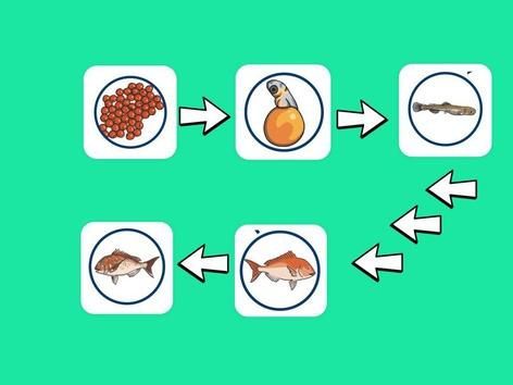 Life Cycle Of Fish by Ng HuiQi