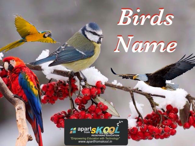 Birds Name by TinyTap creator