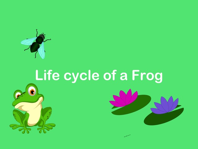 Life Cycle Of A Frog By Shaun Kruger-Fourie by Shaun Kruger-Fourie