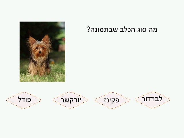 כלבים יותם by בית ספר קישון
