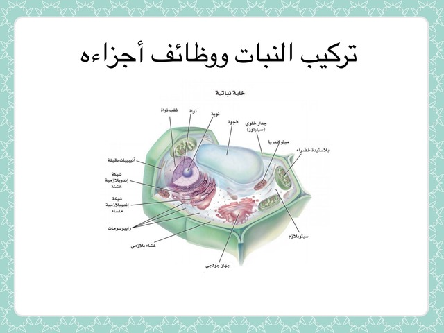 تركيب النبات ووظائف أجزاءه by احمد كريري