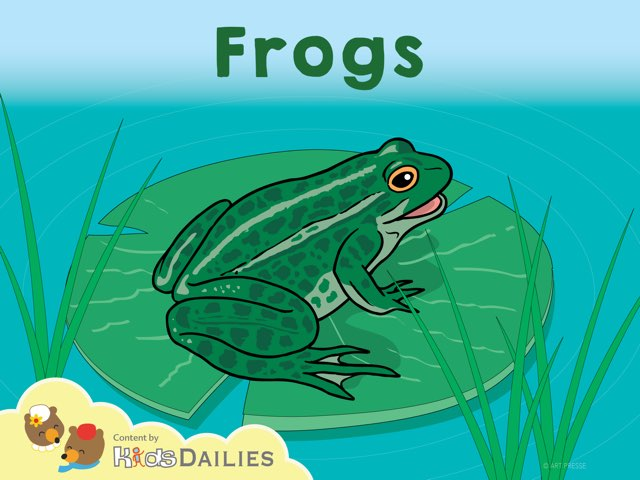 Frogs by Kids Dailies