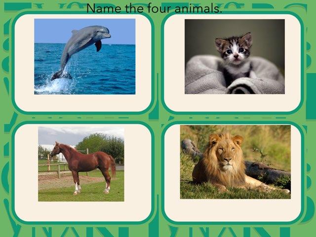 Animal App by Allison bRisman