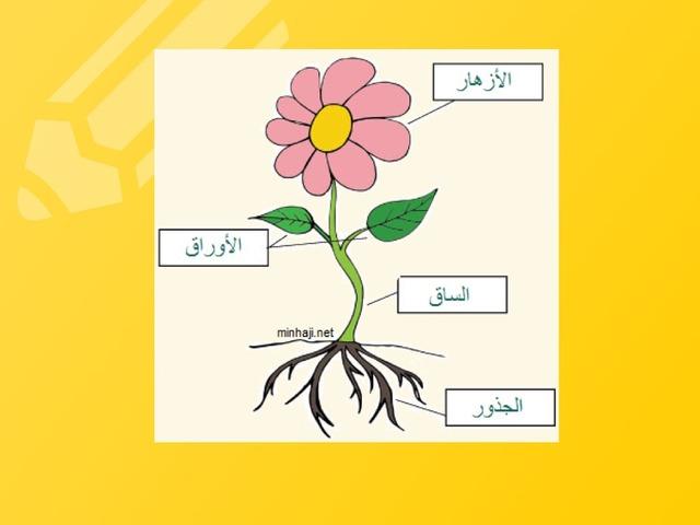 اجزاء النبات by maha yousef