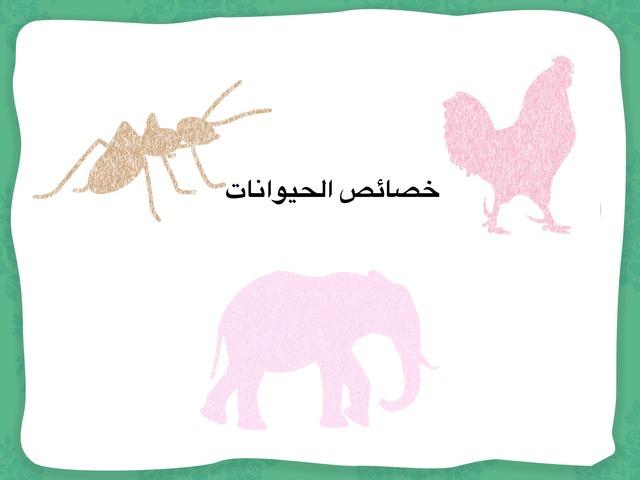خصائص الحيوانات by نورة أحمد