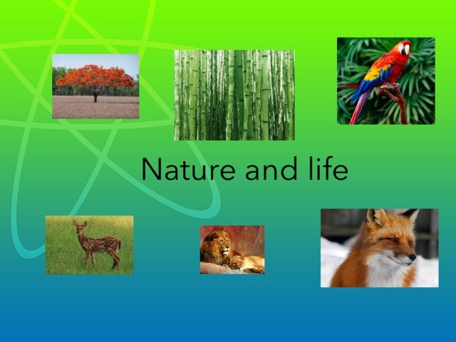 Nature And Life Day 1 by Flora Silver