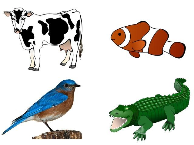 Características Animales by Luis Antonio Grande López