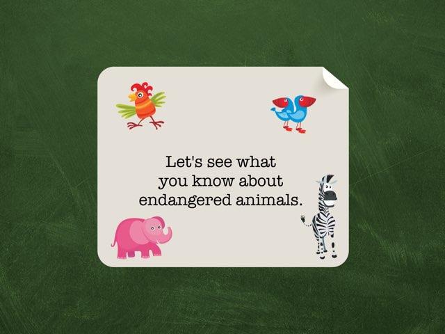 Endangered animals by Kim Lelek
